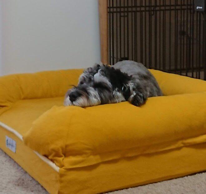 ベッドで気持ちよく寝るアルちゃん画像