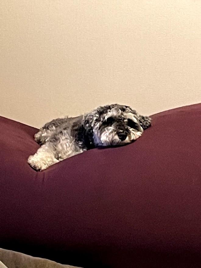ヨギボーでうたた寝するアルちゃんの画像
