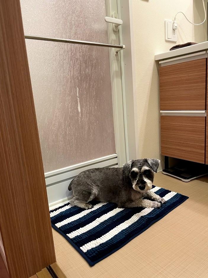 飼い主のお風呂を待つ