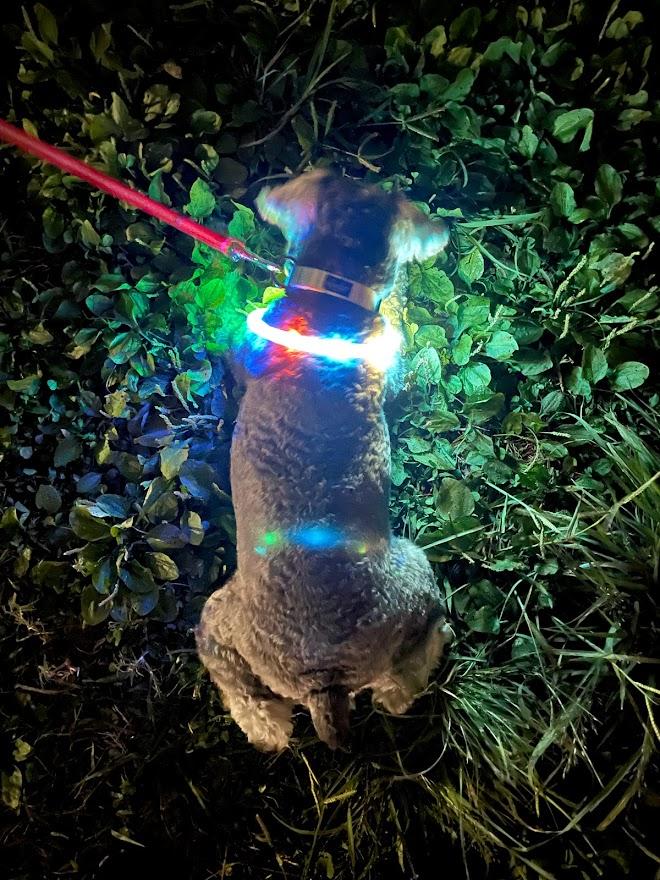 アイキャッチ犬ライト